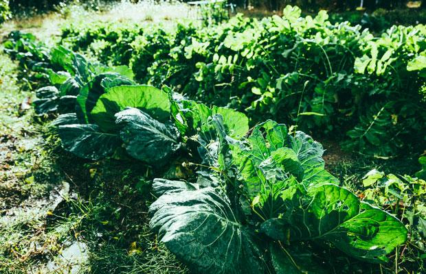 料理に使われる野菜の多くは宿の敷地内の畑から。