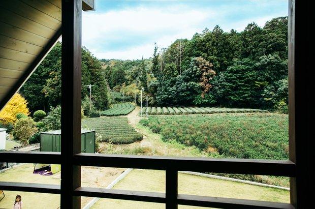 茶畑が見えるNIDOからの眺望。