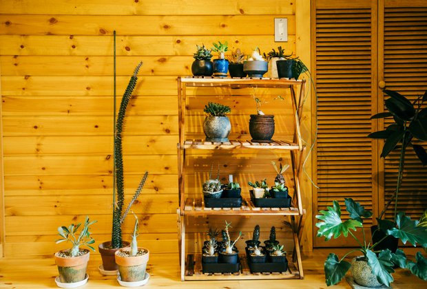 竹本さんの趣味である植物。