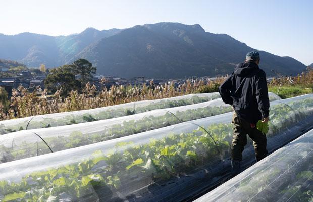 畑はいつもと何も変わらず。今年は昨年よりも野菜の栽培量をだいぶ増やしました。