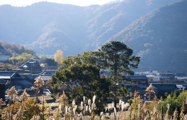 畑から眺める集落の風景。穏やかで美しい。