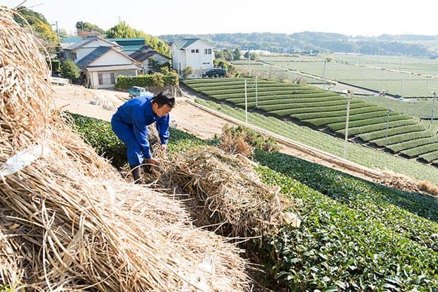 粉砕し、畝に草を敷き込む。かなりの重労働だ。