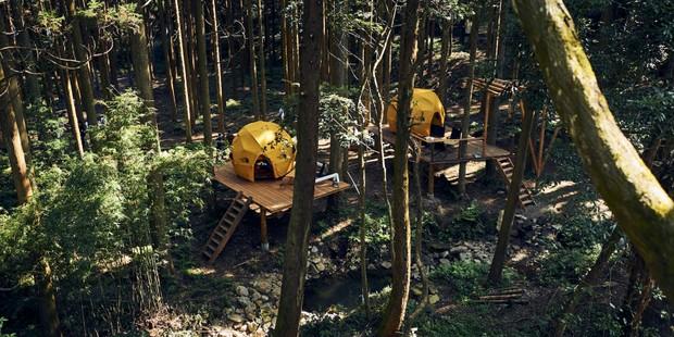 周囲の森の開拓が進み敷地もコンテンツも広がりました。