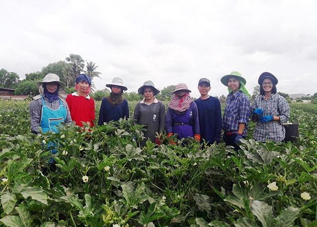 タイにある契約農家の従業員のみなさん。オクラは非常に足が早いため長期保存が難しく、通常は収穫後すぐに日本に空輸されるのだそう。