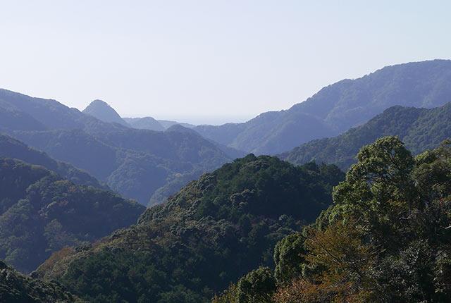 伊豆の森林