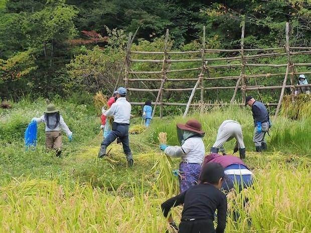 SDGs目標を体験できるよう開催された稲刈りイベント。飢餓や土地の豊かさを経験を通して考えるきっかけになりそうです。