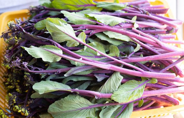 紅菜苔(こうさいたい)という紫色のナバナ。いまが旬!