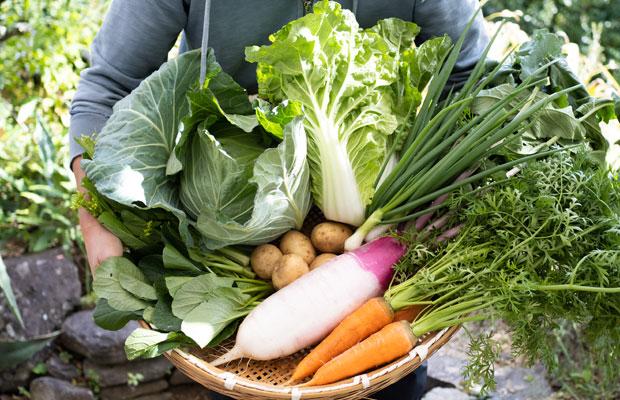 11月の旬野菜セット。キャベツに白菜、大根、にんじん。冬野菜のはじまりの時期。