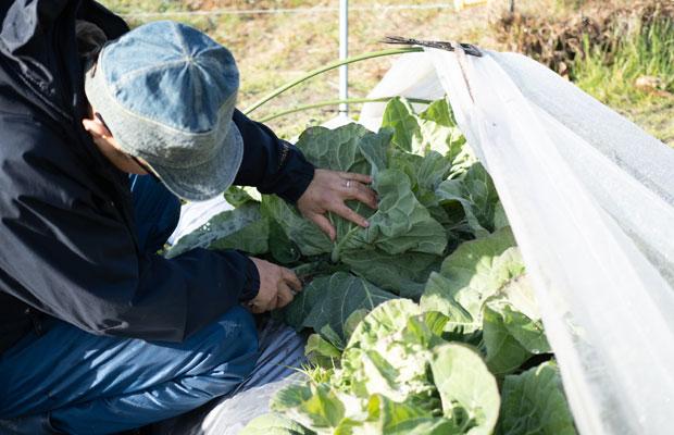 HOMEMAKERSの旬野菜セットは、朝収穫してその日のうちに発送するようにしています(さつまいもなど保管しておく野菜は除く)。