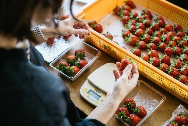 イチゴはひとつひとつ傷みがないかを確認してから、パックに詰めていく。オンライン販売では、関東や広島からの注文が多い。