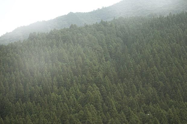 木々が生い茂る山の風景。1518の家具はこうした「NOSTALGIC HUE」(どこかで見た景色)というカラースキームで展開