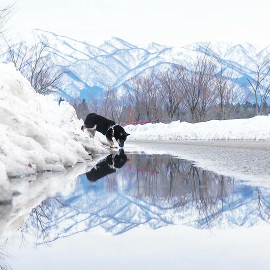 フォトコンテスト「新潟冬物語2021」最優秀賞を受賞した雪山で犬が戯れている様子