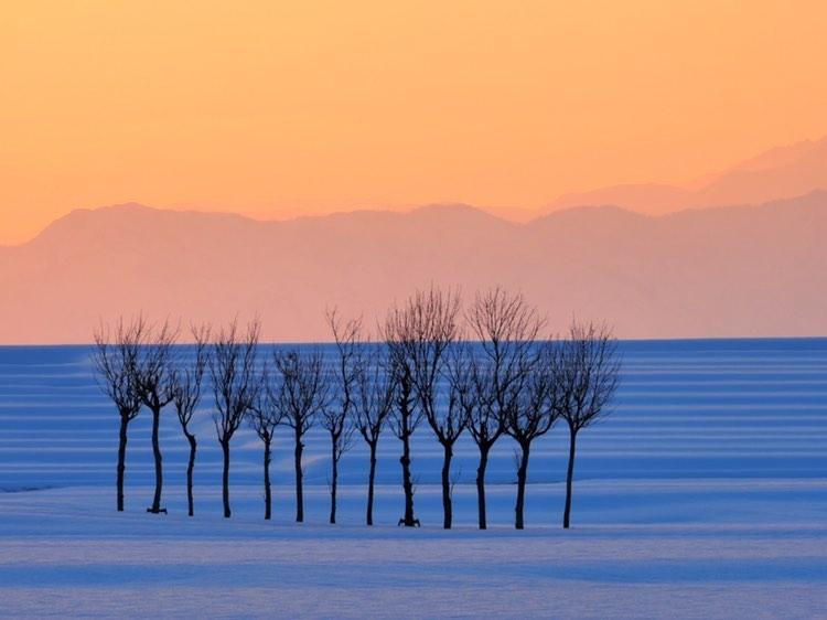 新潟県小千谷市の池ケ原にあるはさ木と雪景色
