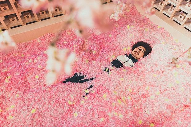 桜プールに埋もれたアフロマンスさん。