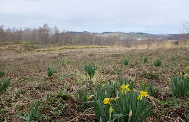 買った山は木が伐採された跡だが、年々、幼木が大きくなっている。