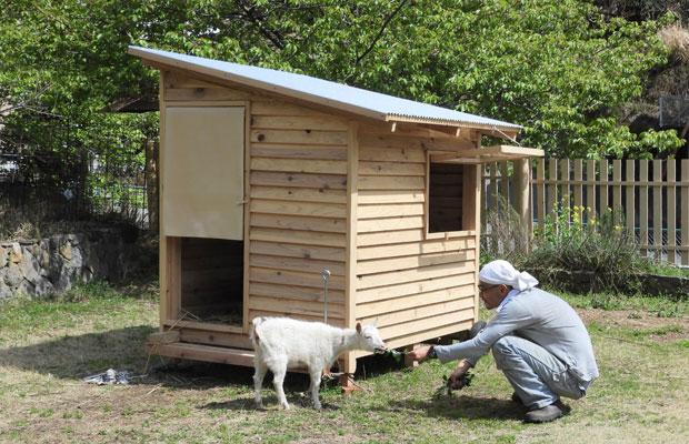 高橋養蜂ではこの春にヤギを飼い始めたそう。その小屋も鎮生さんがつくりました。