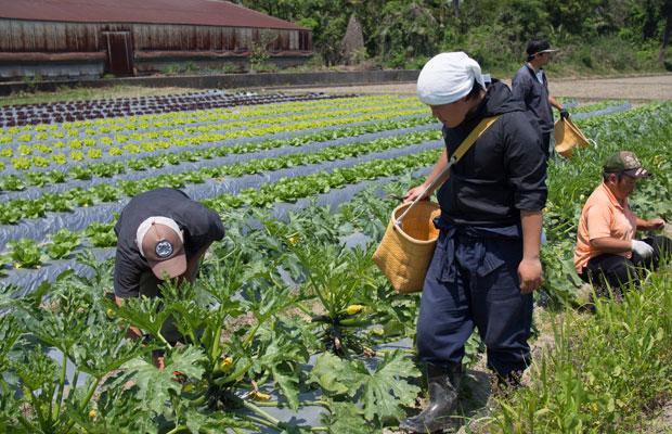 香川県丸亀市にある〈よしむら農園〉さんで1年間研修しました。ここで学んだことが私たちの農業のベース。出会った人たちとはいまも農業仲間としてつながっています。