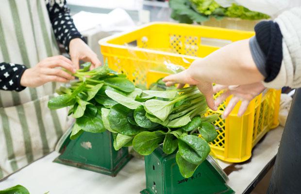 農家は野菜を育てるだけじゃなくて、出荷をどうするかも学ぶ点が多い。