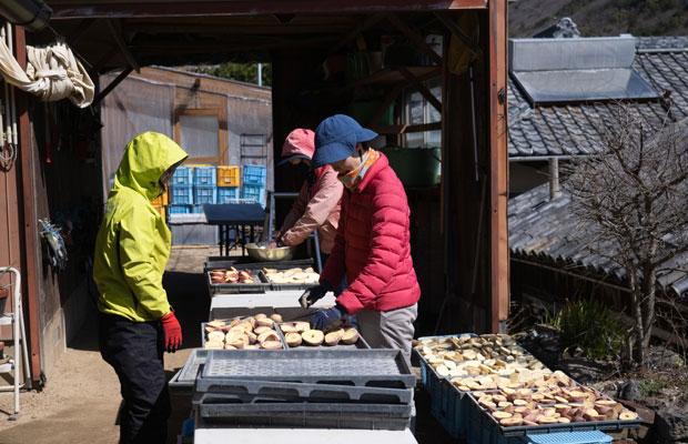 春作のジャガイモ植え付け準備。