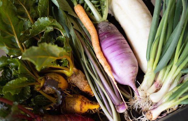 家で食べるように収穫した半端もの野菜たち。きれいに育てられなかったビーツや畑に残っていたワケギなど。それでも自分たちが食べるには十分。