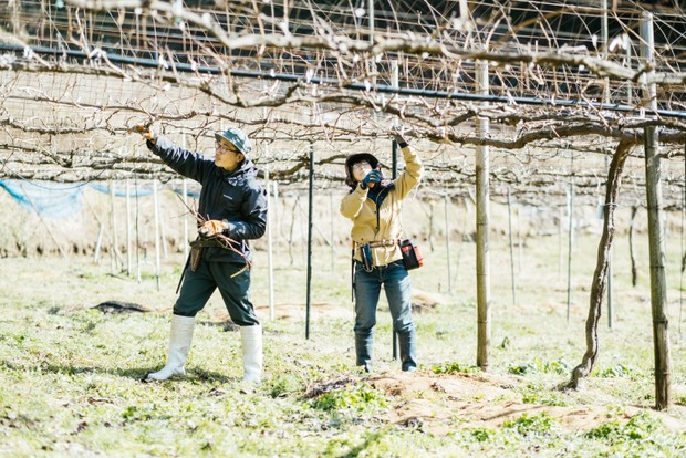 慣れた手つきで枝を剪定していく友和さんと和歌子さん。自分の背よりも高い枝を切ることもある、なかなか大変な作業だ。