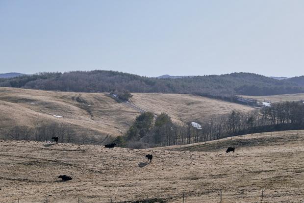 写真はおおのミルク工房の広大な牧場。海だけでなく高原もまた洋野町の魅力だ。