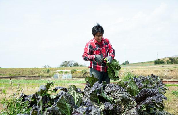 からし菜を収穫する井上さん。定期的に「無肥料栽培応援隊」というコラボイベントを開催している。