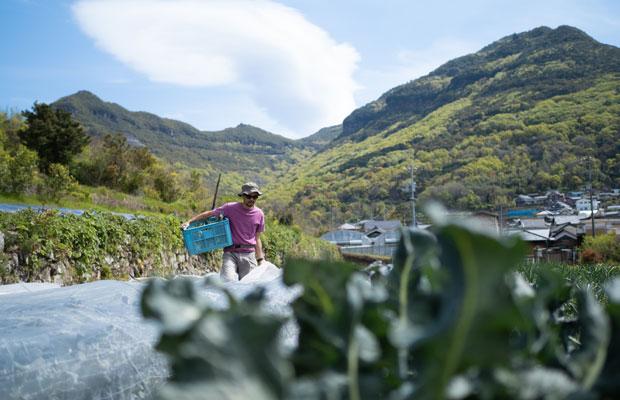 春の畑でブロッコリーの収穫。気温が上がり、野菜の成長スピードも加速。気を抜くとすぐに収穫タイミングを逃してしまう。