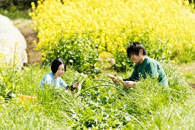 亀戸大根を収穫。通路に蒔かれた緑肥に、ふたりが埋もれているよう。