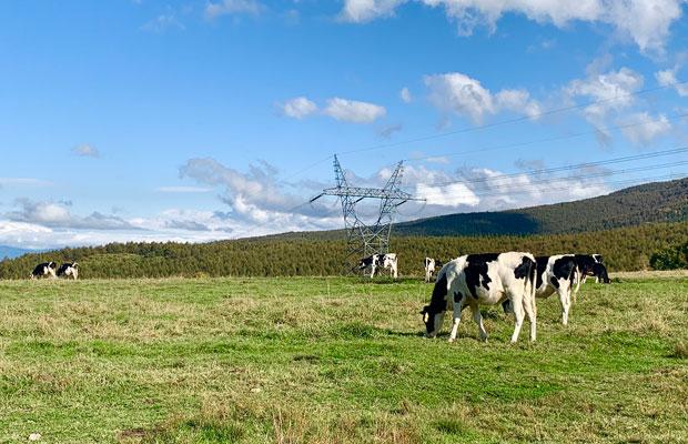 中腹に広がる牧場は観光名所。