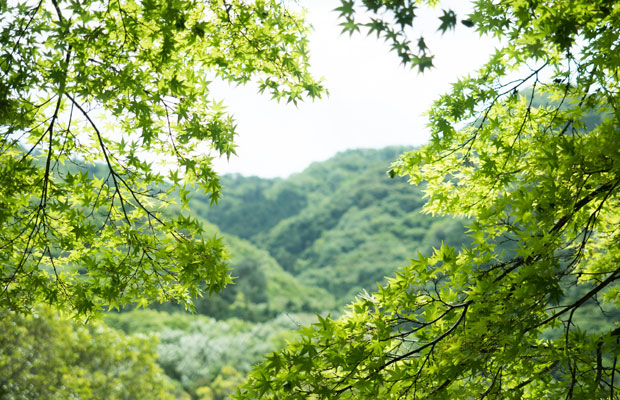 肥土山農村歌舞伎舞台がある肥土山離宮八幡宮からの景色。新緑のもみじと山々が美しい。