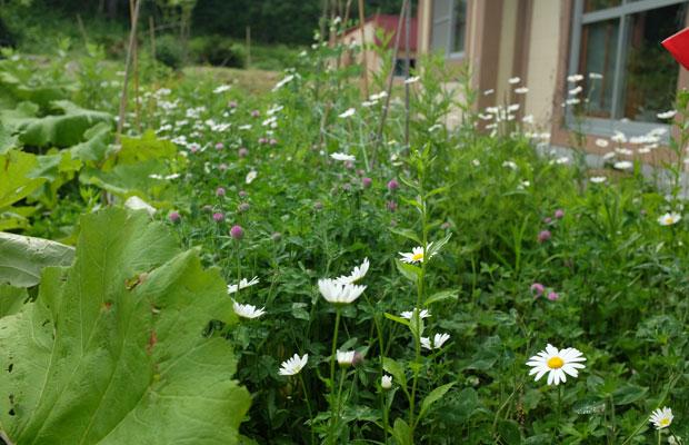 庭には野草がいっぱいに生えている。
