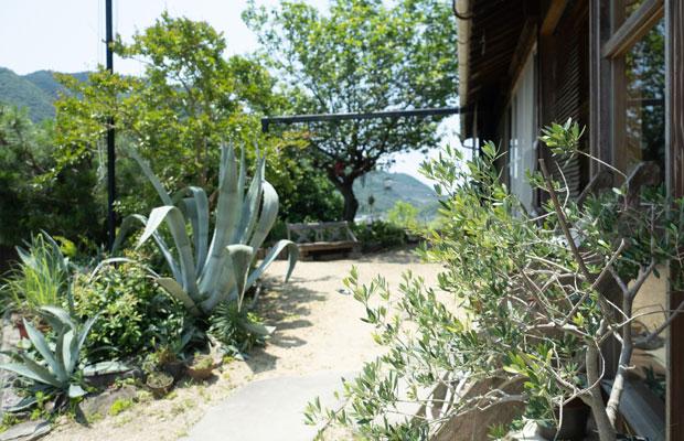 小豆島で暮らし始めて9年目のうちの庭。リュウゼツラン(トゲトゲしたアロエみたいな植物)がだいぶ大きくなりました。