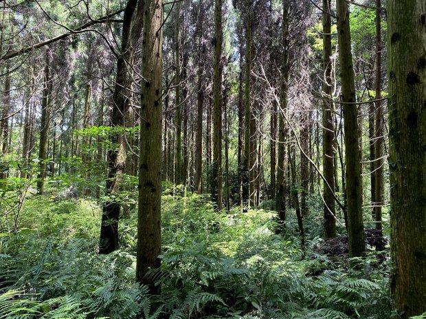 鬱蒼として立ち入ることもままならなかったリバーバンクの森。