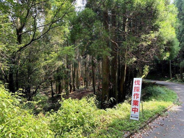 森林組合により伐採作業中。