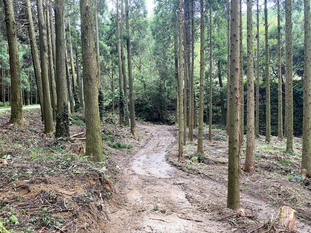 森に道をつくるところから。