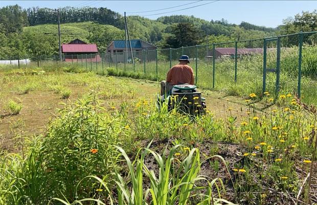 大型機械が入りにくいフェンス側などは小型の草刈機で。