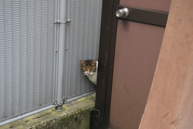 店の前によく現れる野良猫。この子も店が気になるのか、遠くから近くからじーっと見ている。