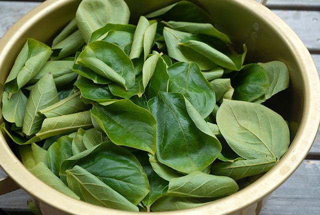 鍋に入れた柿の葉