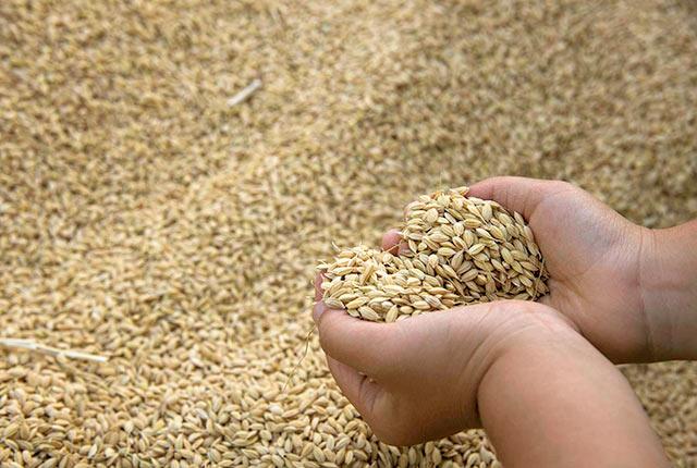 籾の状態の米
