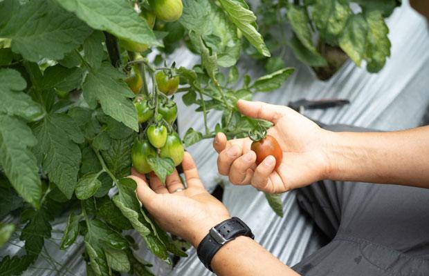 初収穫のときはいつもうれしい。日々、土づくり、種まき、苗植え、手入れ、収穫、片づけ、その繰り返し。