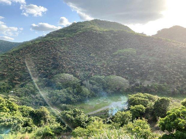 山の斜面に茶色く見えるものはすべて蘇鉄という群生地。