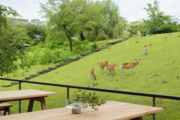 荒池の堤に面し、奈良の自然や近隣に生息する鹿を眺めることができる開放的なテラス。宿泊者のみならず、地域の人々もカフェ&バーの利用が可能です。