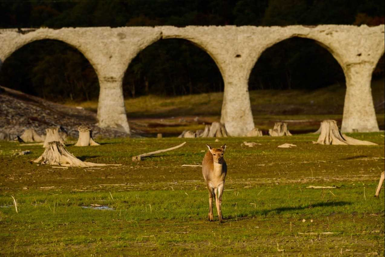 エゾシカとパチリ。「紅葉の時期に橋の全容が見えるのは珍しいんですよ」と岩崎さん(2020年10月撮影)。