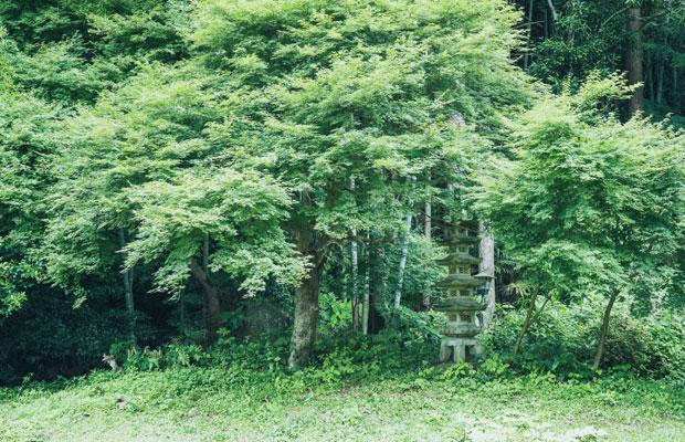 庭も広大で、緑に囲まれた一軒家。