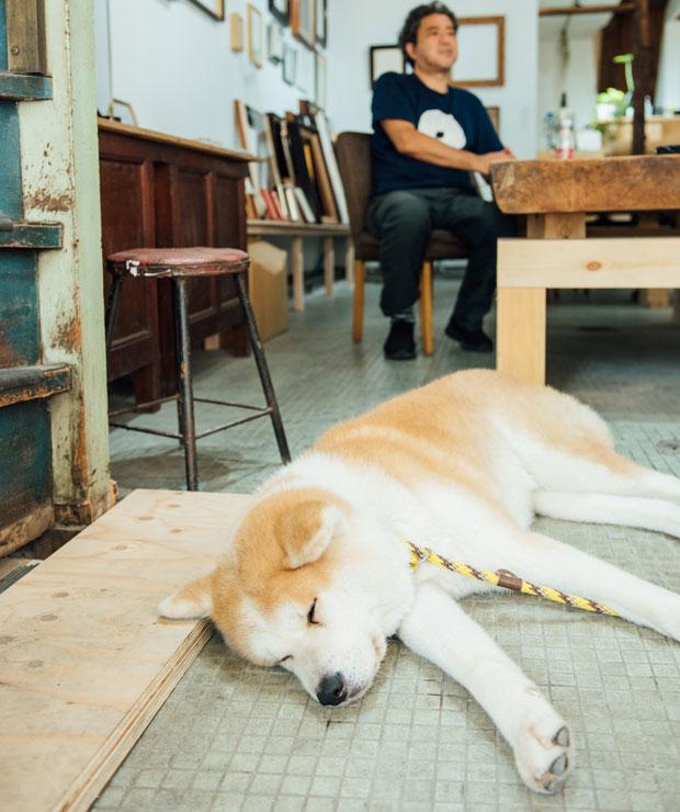 コロカルでもおなじみの秋田犬「ののちゃん」が優美堂でお出迎え。
