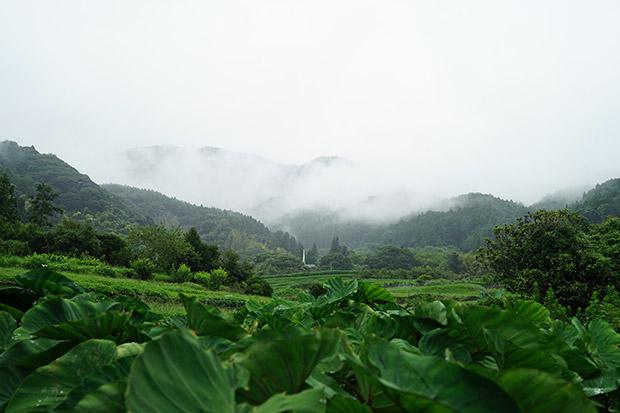 山の上が雲で真っ白になった糸島の風景写真