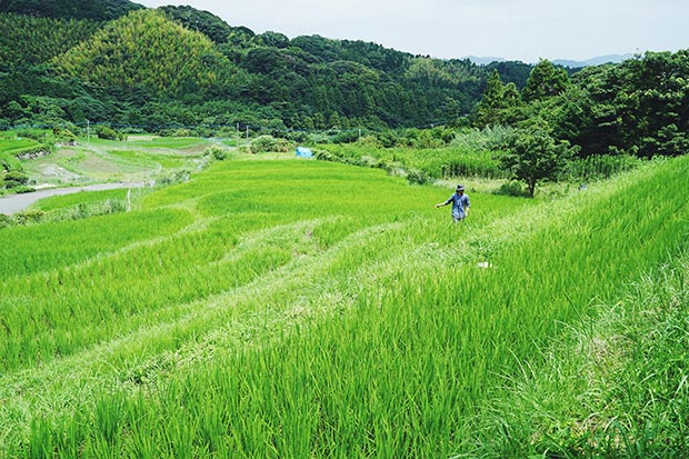 青々とした糸島の棚田で草とりする様子