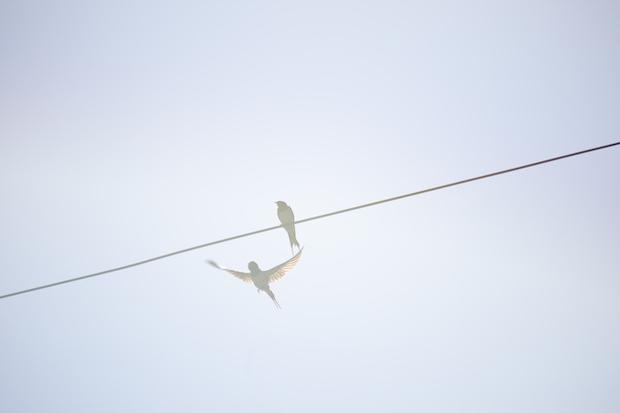 『Des oiseaux(On birds)』より。