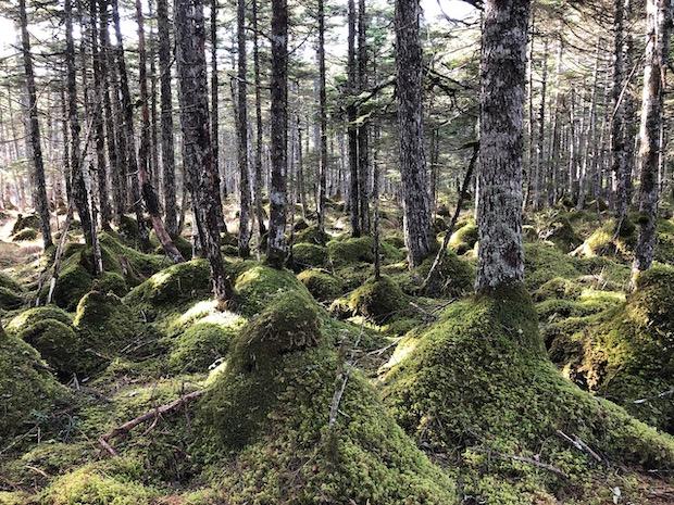 生命力にあふれた根室の森